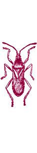 thelondonesque.com - entomology