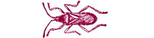 thelondonesque.com - entomology - 1